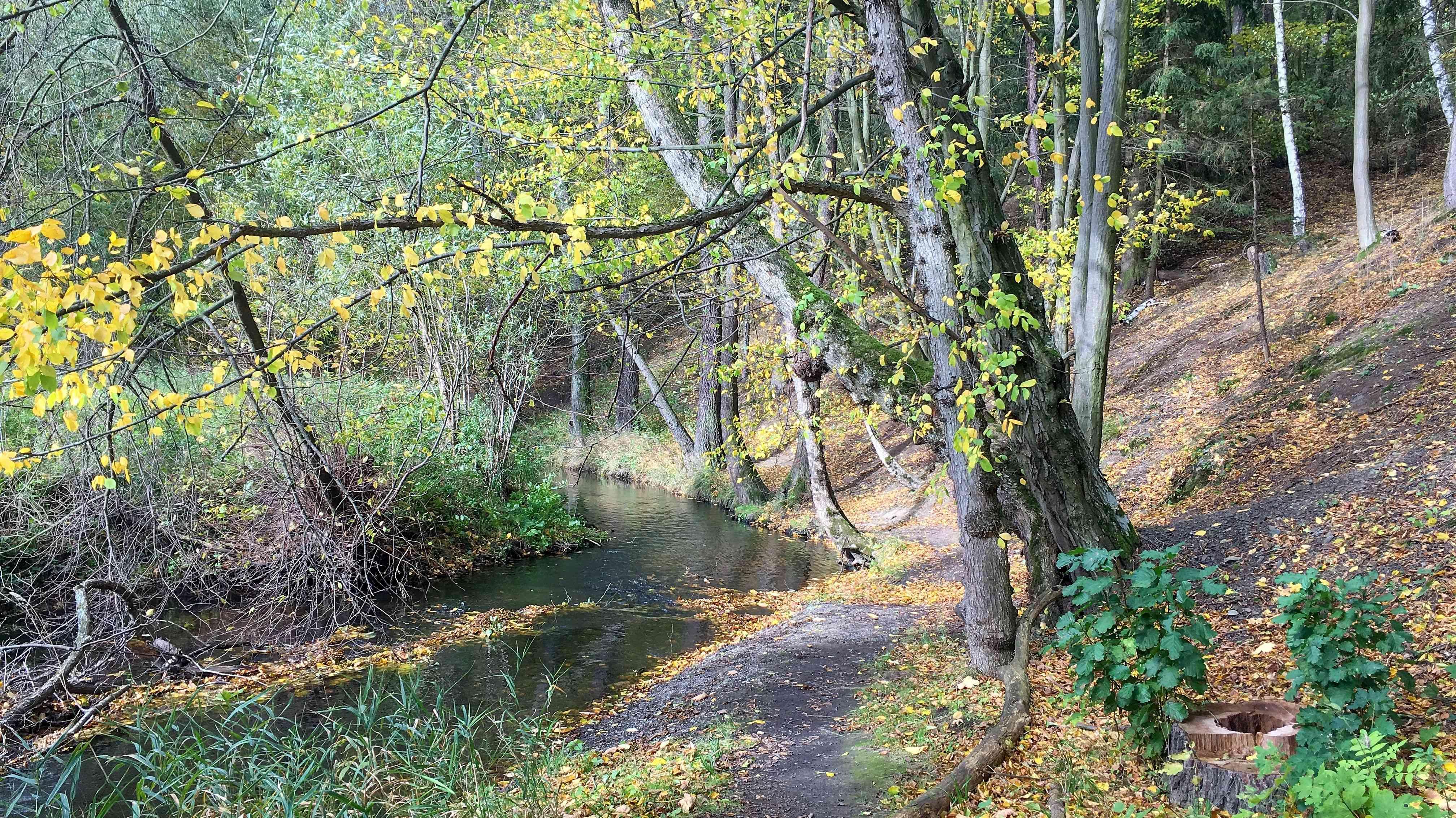 cesta padá k Sychrovskému potoku