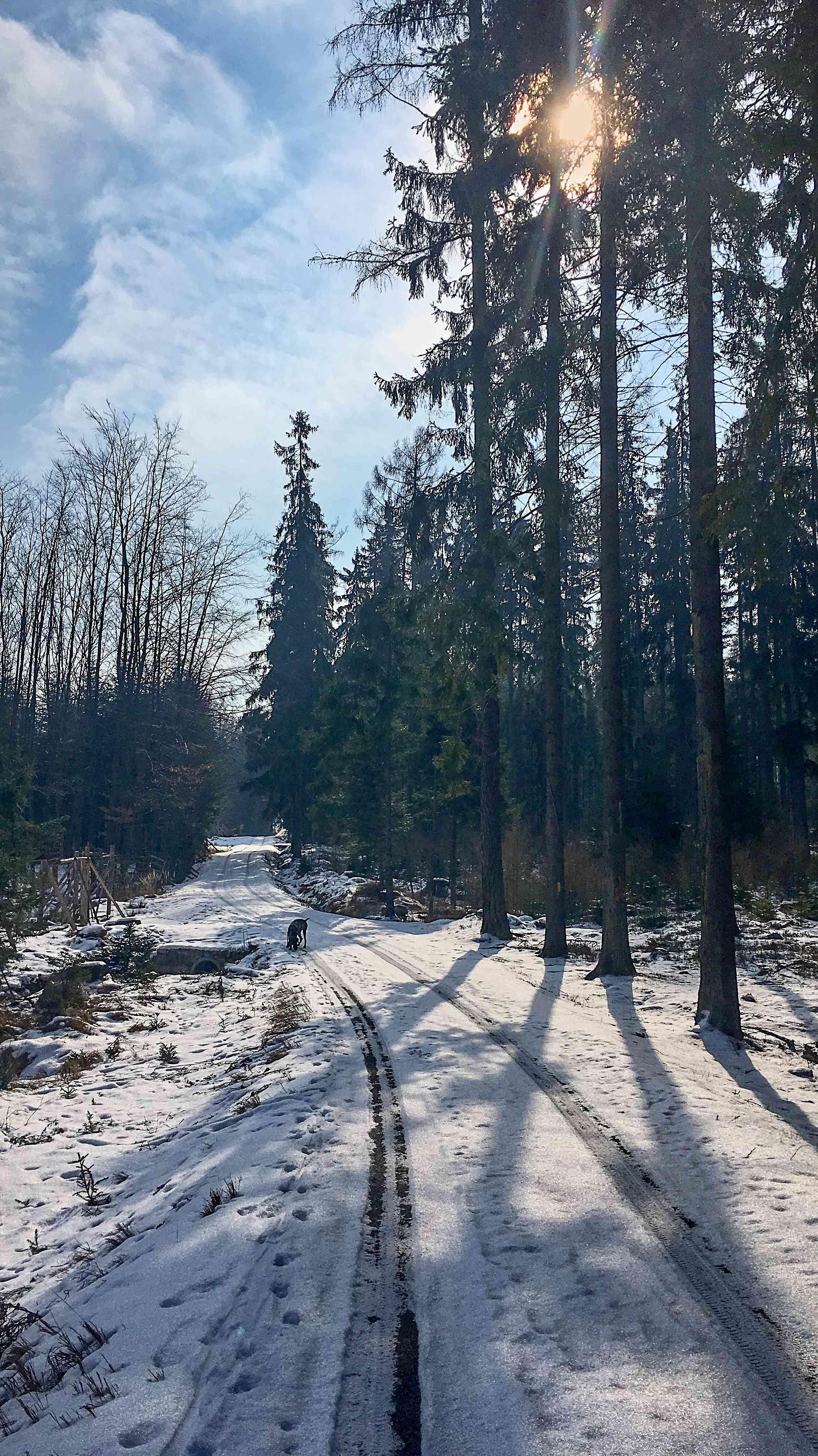 lesní nádhera