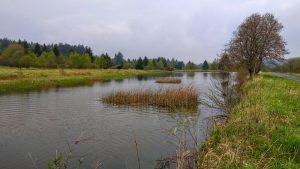 malý rybníček, Kolvín